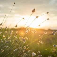 summer-sun-sunset-yellow-447440